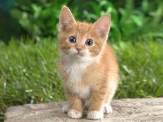 Sooo cute, I love kittens!!!