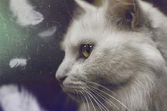 Loooook at this cat
