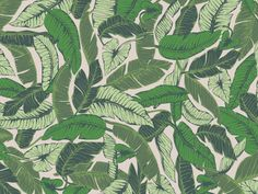 Tropical Pattern v2