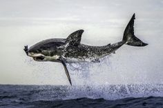 Photographer Dana Allen captured these stunning photos off the shore of Cape Town, South Africa.