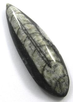 70.80CT AAA/Best/Good Quality NATURAL ORTHOCERAS FOSSIL  60x19mm Pear Gemstone #Handmade