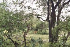 Roteiro de 16 dias no Sri Lanka (a minha viagem)   Alma de Viajante Sri Lanka, Trunks, Plants, The Journey, Wayfarer, Travel, Drift Wood, Tree Trunks, Plant