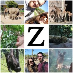 Z is for Zoo! Super fun day at Chester Zoo with my favourite mammal! 😍💖 #AlphabetDating