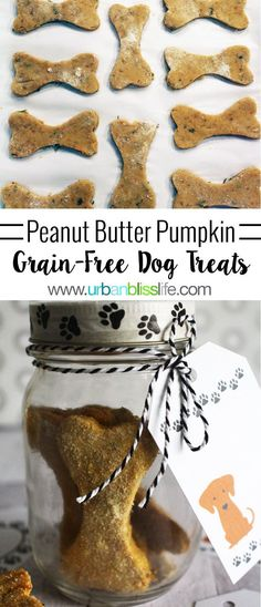 Homemade Dog Food Grain-Free Peanut Butter Pumpkin Dog Treats 25 mins to make, serves 4 - These homemade grain-free dog treats are so easy to make and only take a few ingredients! Your special puppy/dog will love these! Puppy Treats, Diy Dog Treats, Homemade Dog Treats, Dog Treat Recipes, Healthy Dog Treats, Dog Food Recipes, Homemade Biscuits, Food Dog, Puppy Food