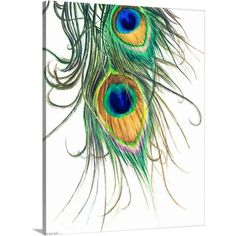 Stunning 'Peacock Feather' Artwork For Sale on Fine Art Prints Peacock Feather Tattoo, Feather Drawing, Feather Art, Feather Tattoos, Peacock Feathers Drawing, Feather Sketch, Watercolor Peacock, Peacock Painting, Peacock Art