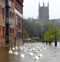 After all the terrible rain in England recently, a group of swans swim down flooded walkways in Worcester