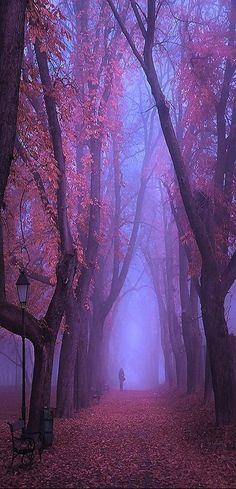 beautiful tree path