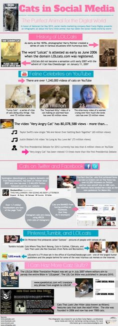 Lol cats and social media. Kitties by the numbers.