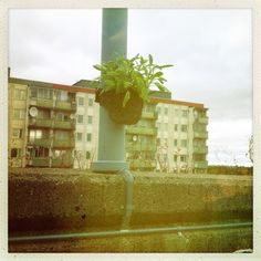The URBANERO Green Activist Pot putting som green in Tensta, west of Stockholm.