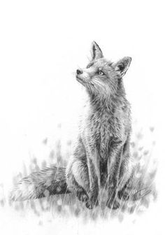 A beautiful drawing of an inquisitive fox, such a beautiful design. Check out my…