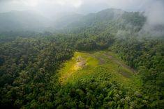 Foja Mountains, Papua, Indonesia