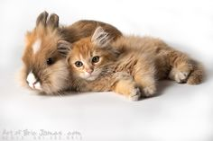 (via 500px / Pumpkin  Alex by Eric James Swearingen (ArtofEricJames.com)) Happy Easter from Mel, the Cat ♥