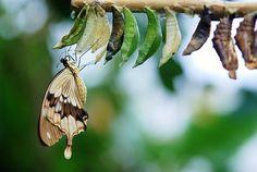 Brown, Weißer Schmetterling