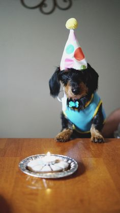 Some Helpful Ideas For Training Your Dog. Loving your dog does not mean you are willing to let him go hog wild on your possessions. That said, your dog doesn't feel the same way. Happy Birthday, Dog Birthday, Birthday Cake, Picture Writing Prompts, Picture Prompt, Writing Ideas, Easiest Dogs To Train, Pet Urine, Cute Dog Pictures