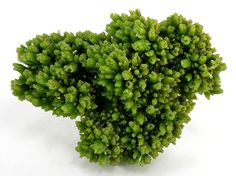 A wonderfully aesthetic flower bright green Les farges color pyro came
