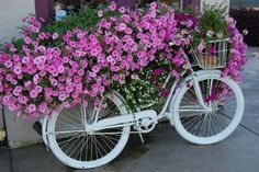 Tagged: bicycle, pink, petunias, garden, flowers, pretty, .