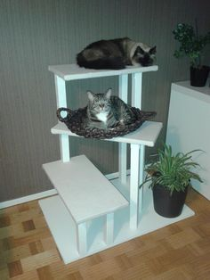 Custom cat perch. Yep this one with rope on the columns and carpet