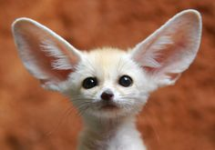 Exotic Animal Pets | What Exotic Pets Would You Like to Have?