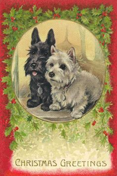 Scottie & WestieTerriers #5 New Christmas Note Cards