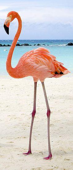 Flamingo Turks and Caicos