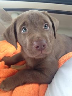 Oh my gosh!! So adorable!! Love her BLUE eyes....
