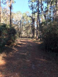 0 CYPRESS FIELDS ROAD, CYPRESS, TX 77429 | The Lippincott Team    Wooded 16 acre lot in the heart of Cypress! Build your dream home here and enjoy the private secluded location but still be close to everything.
