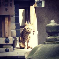 A cat in a shrine. #cat #catsofinstagram #catoftheday #catlove