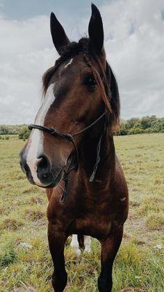 Cute Horses, Pretty Horses, Cute Horse Pictures, Horse Posters, Barrel Racing Horses, Most Beautiful Horses, Horse World, Horse Quotes, Horse Care