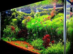 fish tank ideas | Interior Design, The Unique of Aquascaping: Aquascape Aquarium
