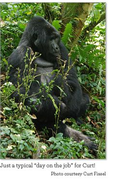 Who knows where these silverbacks live?
