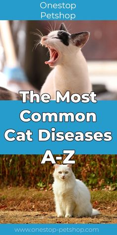 Here is our list with The Most Common Cat Diseases A-Z. Just like humans, cats can also suffer from various diseases. Often the diseases are harmless, but Nurse Cat, Cat Diseases, Sick Cat, Cat Nutrition, Pet Mice, Cat Drinking, Healthy Pets, Cat Health, Animales