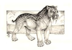 Smilodon Fatalis Concept by balaa Big Cats Art, Furry Art, Cat Art, Weird Creatures, Fantasy Creatures, Mythical Creatures, Tiger Sketch, Tiger Drawing, Animal Sketches
