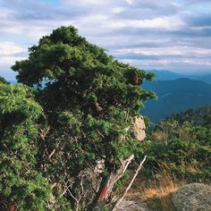 #paiscataro #pirineos #Cataluña #pyrenees #hiking #tree #nature #naturaleza #sol #España