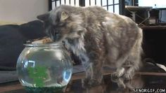 14 Animals That Never Saw It Coming X)
