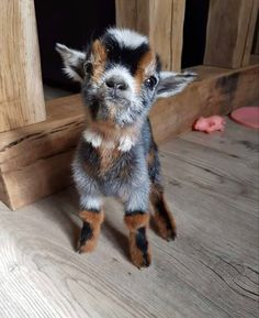Baby Animals Super Cute, Cute Little Animals, Cute Funny Animals, Baby Animals Pictures, Cute Animal Photos, Animals And Pets, Wild Animals, Cute Goats, Baby Goats