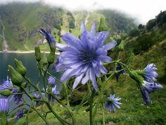 Paysages -Printemps -Été Fleurs de montagne