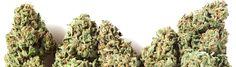 Potent Cannabis Edibles- Recipes, Tips & Advice for Making the Most Potent Medical Marijuana Edibles - Part 2