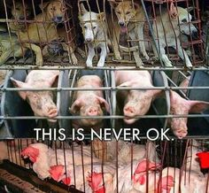 Please don't finance heartbreaking violent animal cruelty. Know the truth. Please help me save the Animals