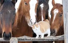 Image result for barn cats