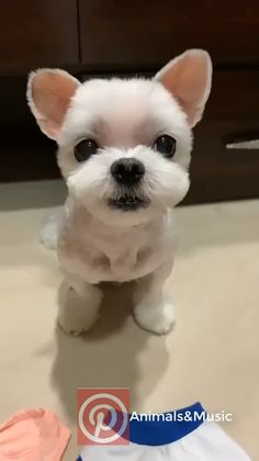 Baby Animals Super Cute, Cute Baby Dogs, Cute Funny Dogs, Cute Dogs And Puppies, Cute Little Animals, Cute Funny Animals, Doggies, Cute Little Dogs, Cute White Puppies