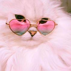 Cartoon Pics, Cute Cartoon, Funny Animals, Cute Animals, Cute Cat Wallpaper, Baby Pugs, Cat Aesthetic, Cat Boarding, Cool Cats