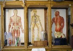 odditiesoflife:  Vintage Medical Cabinets with Anatomical Charts    #anatomy #cabinets