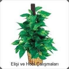 Plant Herbs, Plants, Botany, Herb, Flora, Plant, Spice