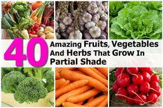 3-6 hours of sun per day/constant dappled shade. Size/yields may be affected(*) but still delicious Arugula, Beans*,Beets*,Blackberries & raspberries*, Broccoli*, Brussels,Sprouts,Cabbage*,Cardamom,Carrots*,Cauliflower*,Cilantro,Collards,Coriander,Cress,Currants, Dill, Endive,Garlic,Gooseberries,Green onions, Kale,Kohlrabi*, Lemon Balm, Lettuce,Mint, Mustard greens,Pak Choy, Parsley,Peas*,Potatoes*,Radishes,Rhubarb*,Sorrel,Spinach,Strawberries*, Sweet potatoes & yams*, Swiss Chard, Tarragon…