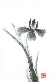 Sumi-e Iris Painting by Terri Harris - Sumi-e Iris Fine Art Prints and Posters for Sale