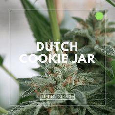 Dutch Cookie Jar, Photo credits: Double Dutch Farms