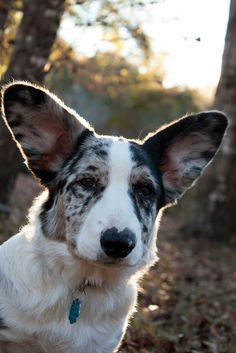 I like your spots and your ears, you can come live with me now, please and thanks