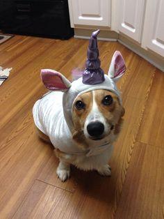 You say unicorn, I say uniCORG! TheDailyCorgi.com