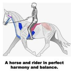 How to keep a secure seat in all gaits
