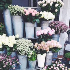 soft blooms